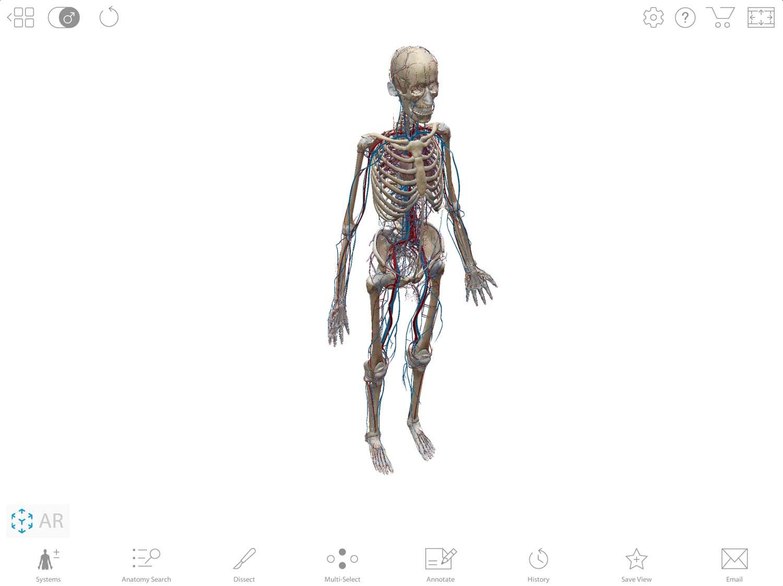 Human-Body-App-on-iPad-Pro